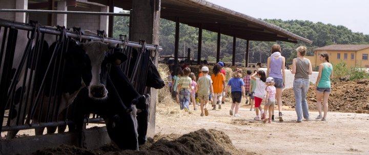 La vida en una granja en família