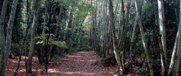 Itinerari per la vall d'Olzinelles