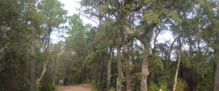 Itinerari de la Batllòria a la Serra de can Puig